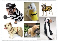 Dog Costumes For A Howling Halloween