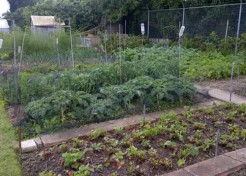 Allotments: Getting Started Growing Your Own Vegetables