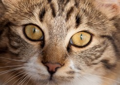 What You Need to Know to Keep Your Cat Healthy