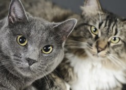 What to do When Your Cats Don't Get Along