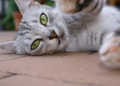 Fun Ways to Engage Your Cat in Interactive Play