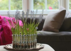 Winter Gardening: How to Force Grape Hyacinths Indoors