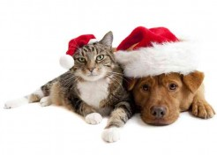Holiday Gift Ideas for Your Furry Friends