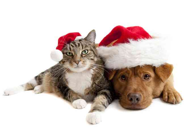 Pet Gifts 1