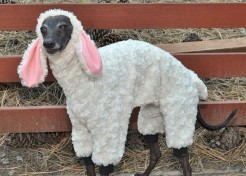 Adorable Easter Outfits for Pets