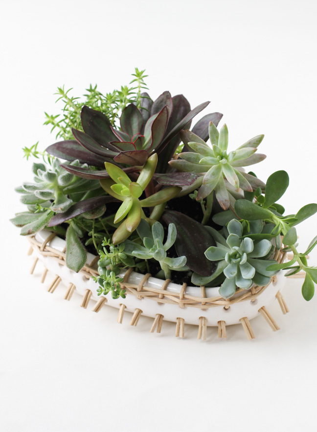 gift-idea-for-someone-with-a-green-thumb-3