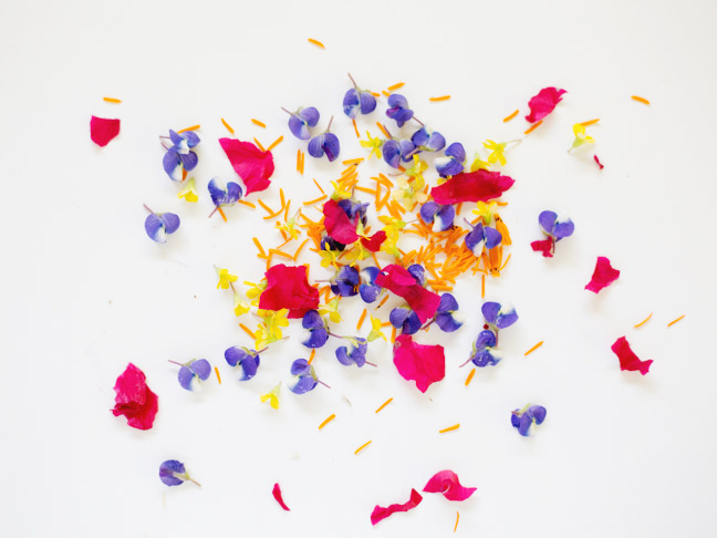 tiny-flower-petals-white-background
