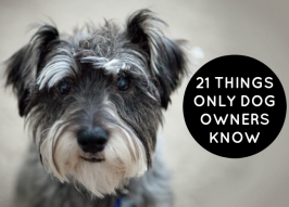 21 Things Only Dog Owners Know