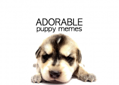 Adorable Puppy Memes