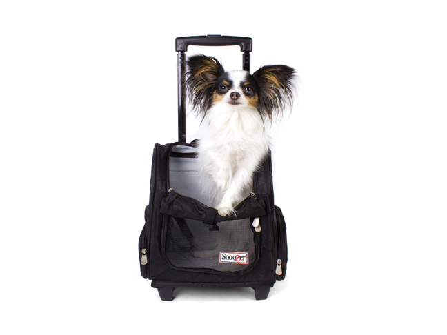 best_dog_carrier_6
