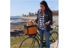 7 Amazing Finds That Make Traveling With Your Dog Easier