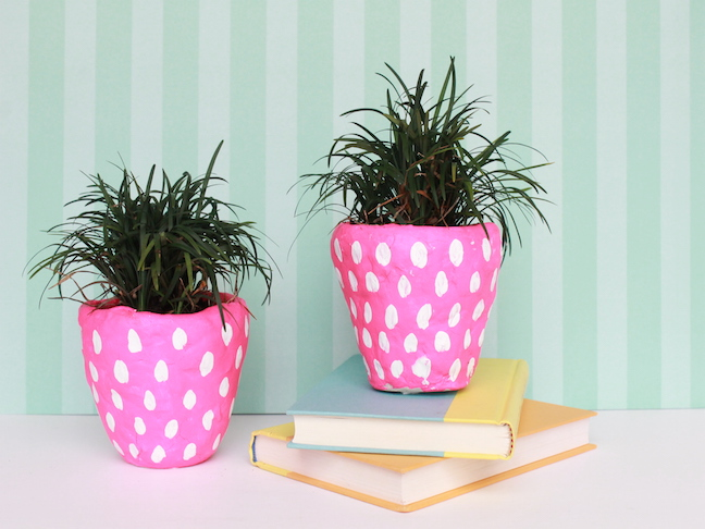 pink pot white dots plants