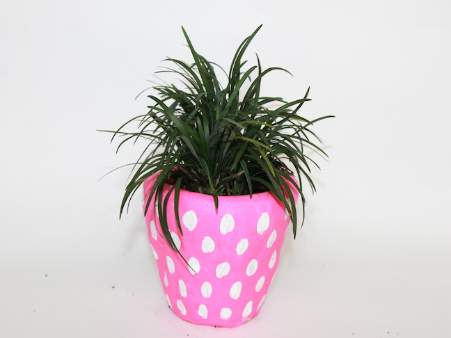 pink pot white dots plant