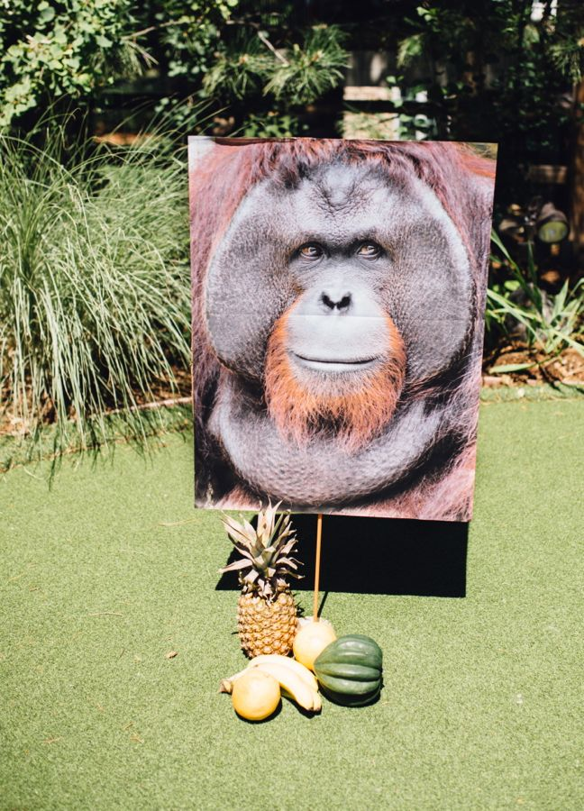 king-louie-the-jungle-book-large-photo-kids-activity-monkey