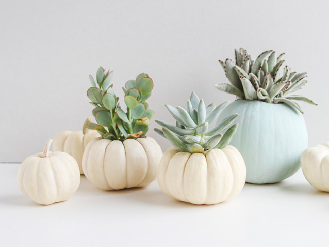Mini Succulent Garden with Pumpkins