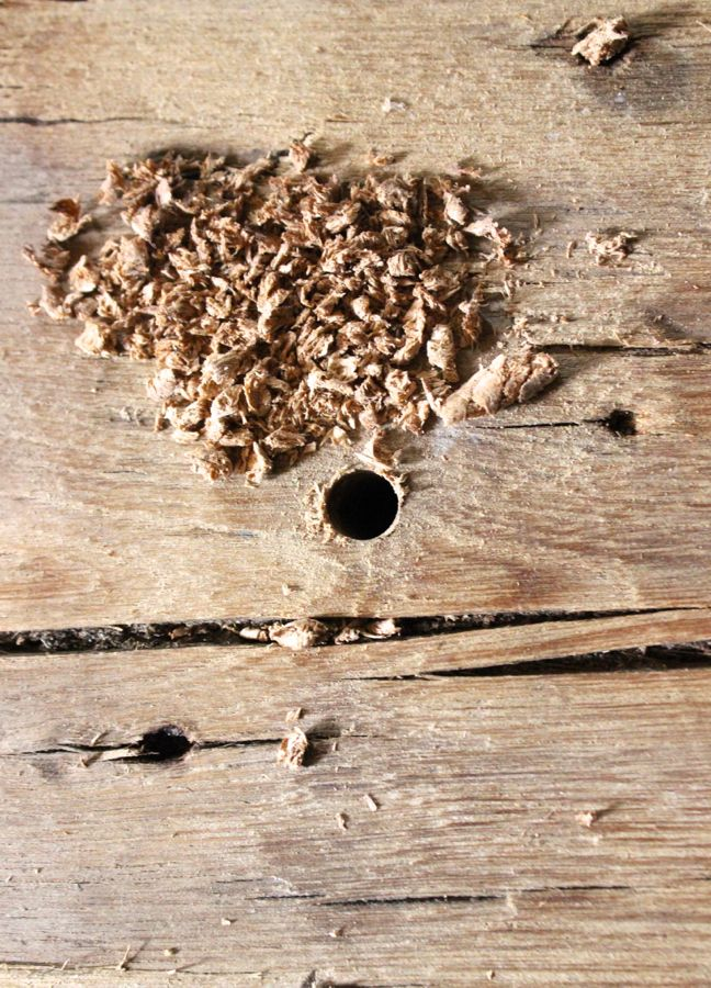 wood drill hole