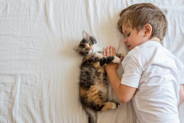 What I Wish I Had Known Before I Brought Home A Kitten