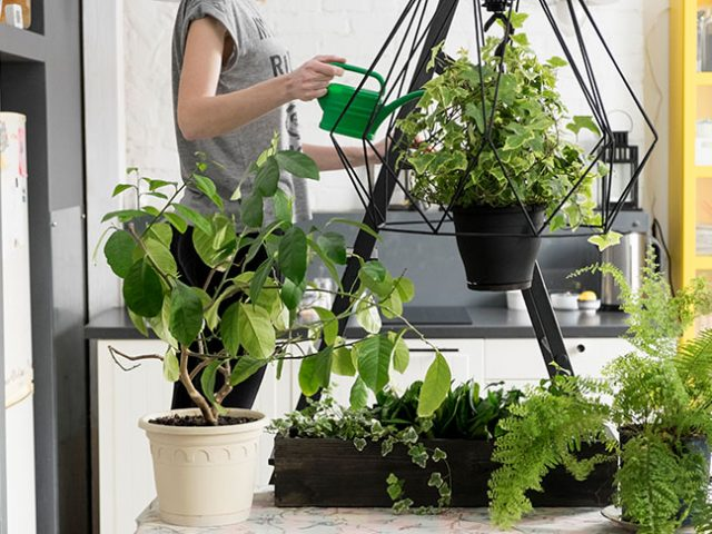 4 Solid Benefits of Keeping Indoor Potted Plants
