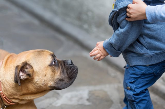Cynophobia? How to Help Your Kids Be More Comfortable Around Dogs