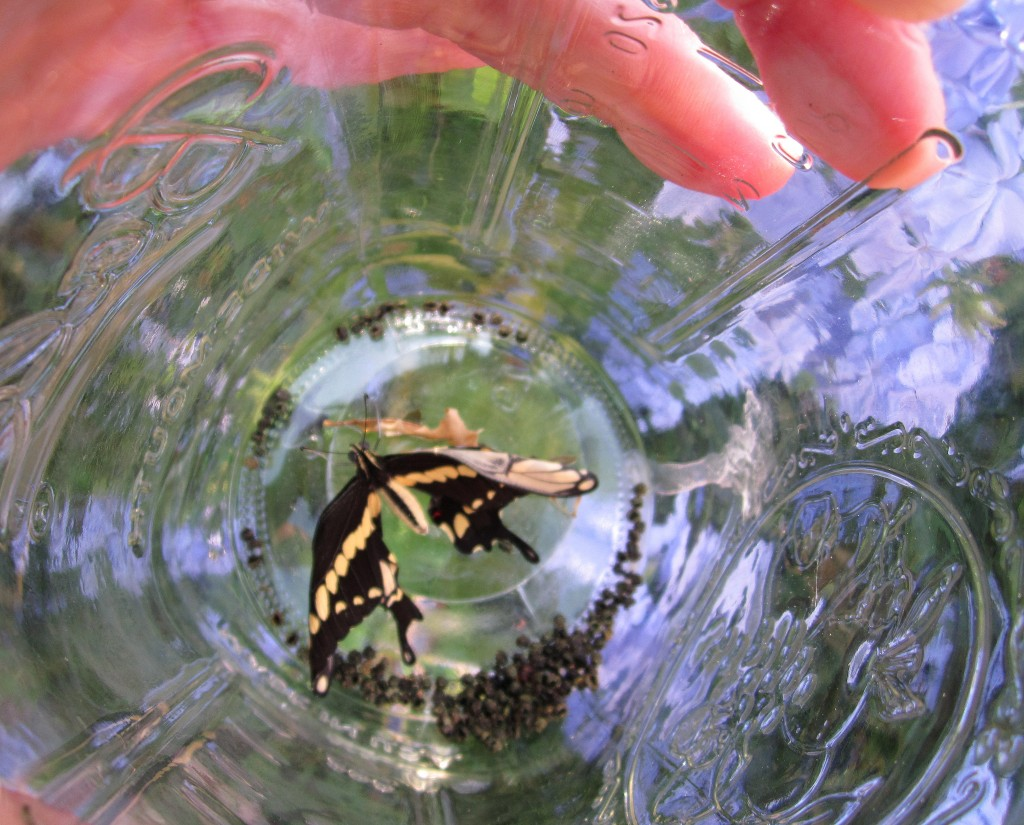 For the Kids: Butterfly Home