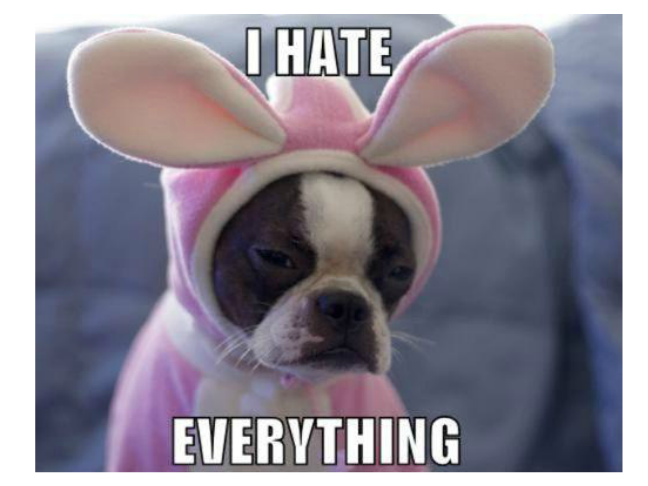 adorable puppy memes on momtastic i hate everything dog humor page 15 forums at psych central