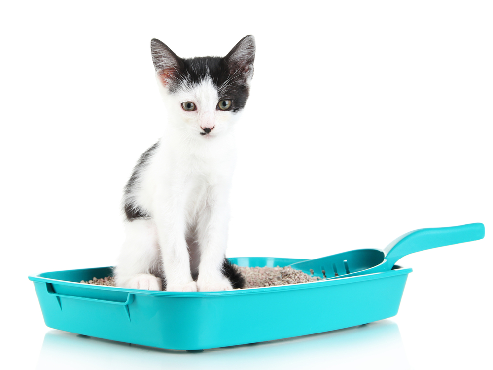Litter Box, continued
